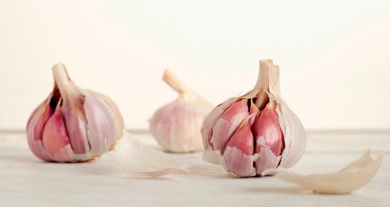 Quelle est la variete d oignons que l'on peut semer ?